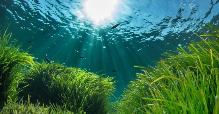 Superyachts will no longer be able to anchor in areas of seagrass